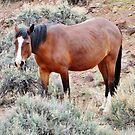 Native Horse by marilyn diaz