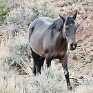 Mustang by marilyn diaz