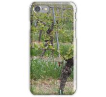 Grape vine in a vineyard iPhone Case/Skin