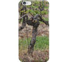 Grape vine in a vineyard in spring. iPhone Case/Skin