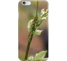 Fresh sprouts of grape vine iPhone Case/Skin