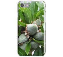 Green fruit on an almond tree, Prunus dulcis. iPhone Case/Skin