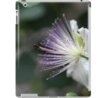 Flower of the caper bush, Capparis spinos. iPad Case/Skin