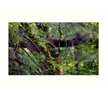 Mossy Tree in the Forest Art Print