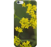 Flowers of woad iPhone Case/Skin