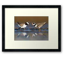 Mating plovers Framed Print