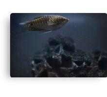 fish and skull Canvas Print
