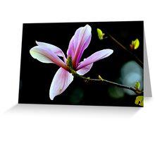"""Magnolia Blossom"" Greeting Card"