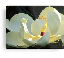 Grandiflora Metal Print