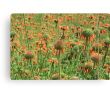 Field of Wild Cone Flowers Canvas Print
