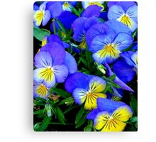 Pansies - Blue and Yellow Canvas Print
