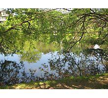 tree branch pond mirror  Photographic Print