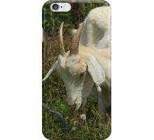 Goat in Wildflowers iPhone Case/Skin