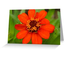 Vibrant Blooms in Red Greeting Card