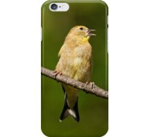 American Goldfinch Singing iPhone Case/Skin
