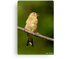 American Goldfinch Singing Canvas Print