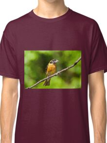 Male Black Headed Grosbeak Classic T-Shirt