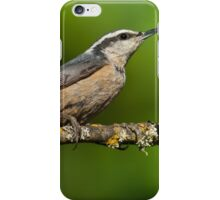 Red Breasted Nuthatch in a Tree iPhone Case/Skin