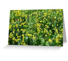 A Riot of Daffodils and Tulips - Keukenhof Gardens Greeting Card