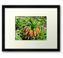 Bad Hair Day - Crown Imperial Framed Print