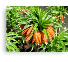 Bad Hair Day - Crown Imperial Canvas Print