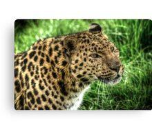 Amur Leopard (1) Canvas Print