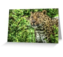 Amur Leopard (3) Greeting Card