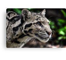 Clouded Leopard (1) Canvas Print