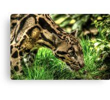 Clouded Leopard (3) Canvas Print