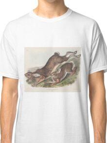 John James Audubon - Lepus americanus. Erxlebein. Northern Hare. Summer.   1, Male. 2, Female.1843 Classic T-Shirt