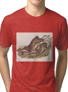 John James Audubon - Lepus americanus. Erxlebein. Northern Hare. Summer.   1, Male. 2, Female.1843 Tri-blend T-Shirt