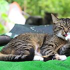 Mishu-Socks at His Ablutions by Dennis Melling