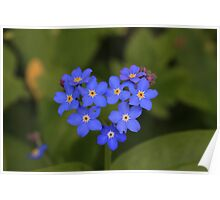 Forget me not - Heart Poster