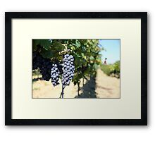 Wine in the making Framed Print