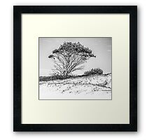 Tree in high key black and white Framed Print