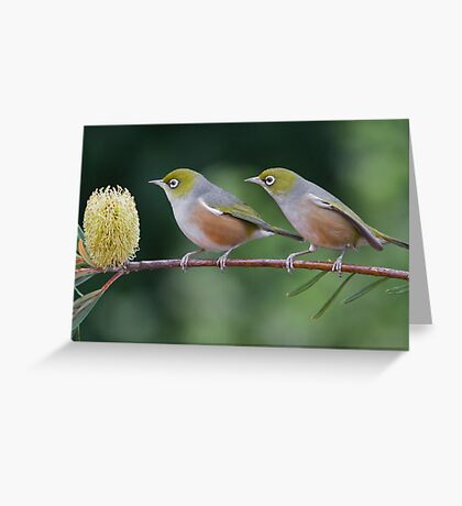 Two Silvereyes Greeting Card
