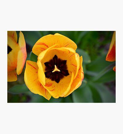 flower people Photographic Print