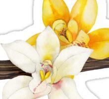 Watercolor vanilla vignettes Sticker