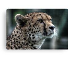Cheetah (3) Canvas Print