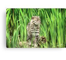 Fishing Cat (3) Canvas Print