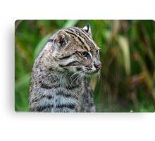 Fishing Cat (4) Canvas Print