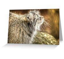 Pallas Cat (3) Greeting Card
