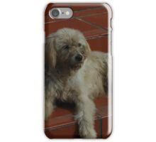 Stray Dog on Steps iPhone Case/Skin