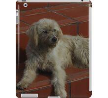 Stray Dog on Steps iPad Case/Skin