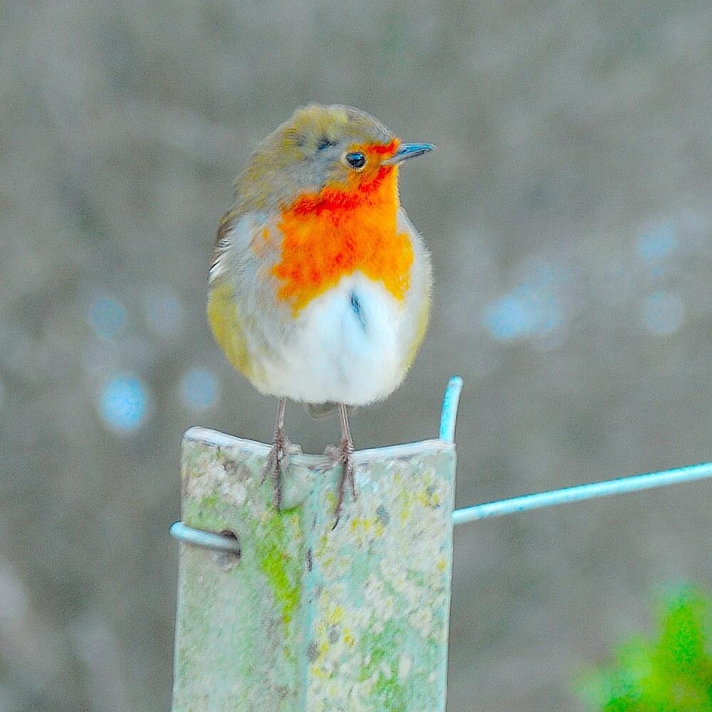 robin by Stephen Frost