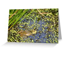 Marsh Frog Greeting Card