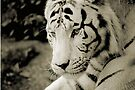 THE WHITE TIGER III by Leny .