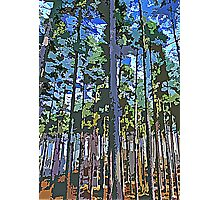 Nordic Forest Photographic Print