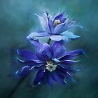 Clematis Blue by clint hudson