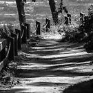 Shadow Path by Heather Friedman